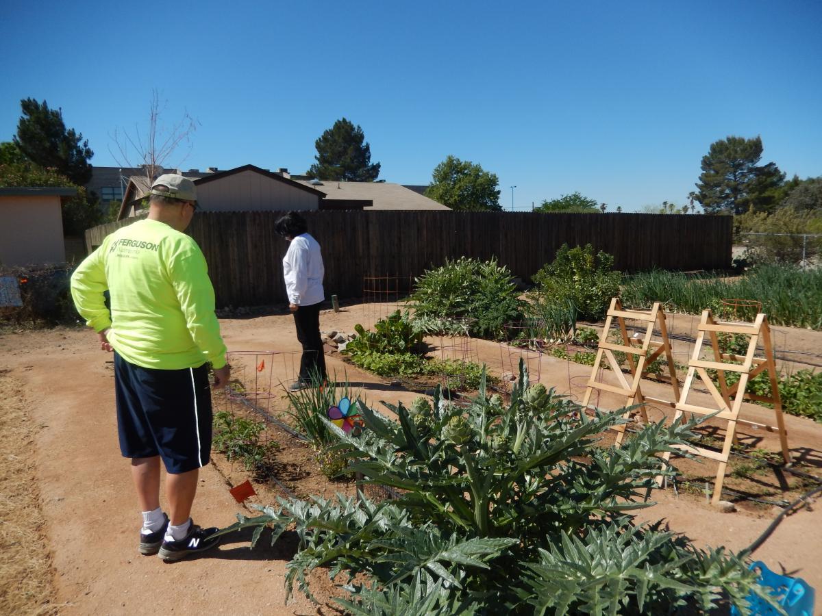 Community Gardens of Tucson's Keeling Garden