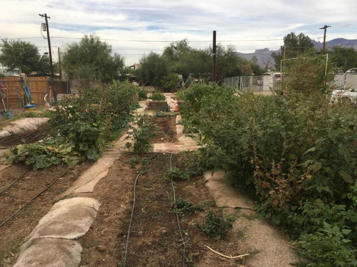 St. Demetrios Garden, International Rescue Committee and Community Gardens of Tucson